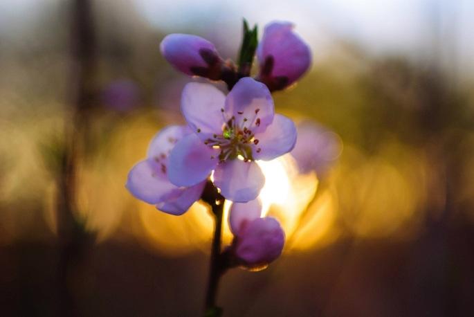 flowers-1760635